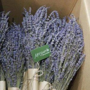 hoa lavender khô giá sỉ