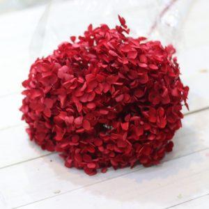hoa cẩm tú cầu khô