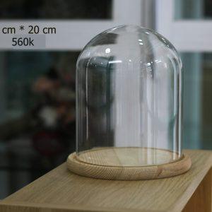 Nắp chụp thủy tinh đế gỗ Dom 15x20 cm