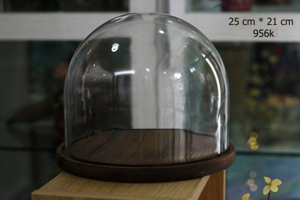 Nắp chụp thủy tinh đế gỗ Dom 25x21 cm
