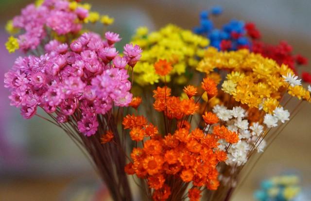 Ý nghĩa của hoa Snowy Flower